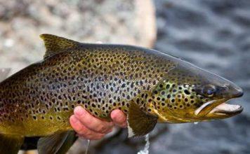 Отчет о рыбалке: Амга, река