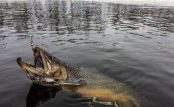 Отчет о рыбалке: 28 января 2018, Белые Камни, Киев