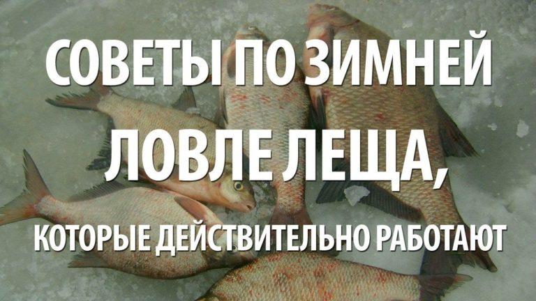 просто рыбалка на что ловить леща