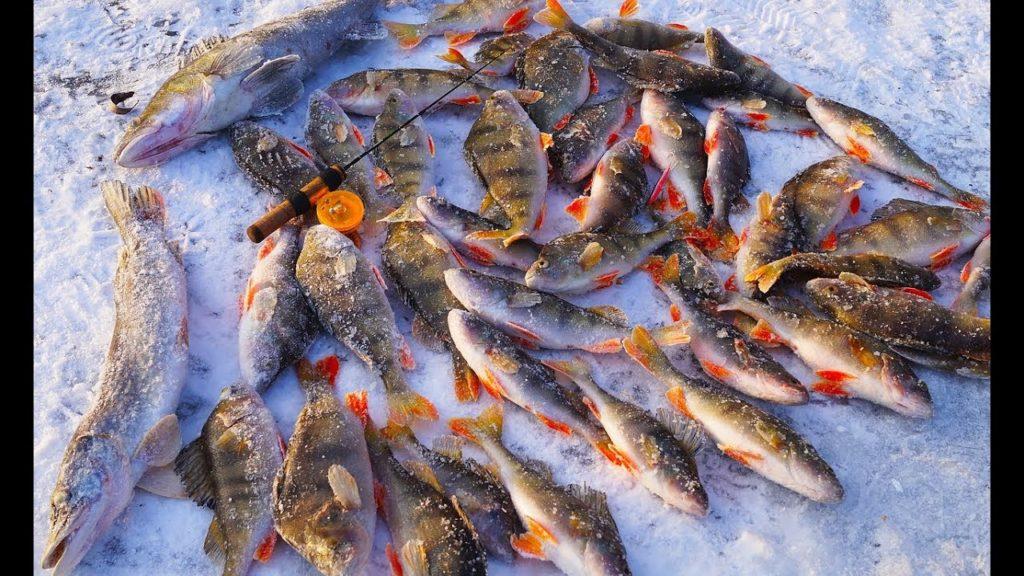 рыбалка на крупную сеть