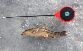 Отчет о рыбалке: 27 января 2018 — 01 января 1970, Исеть, река