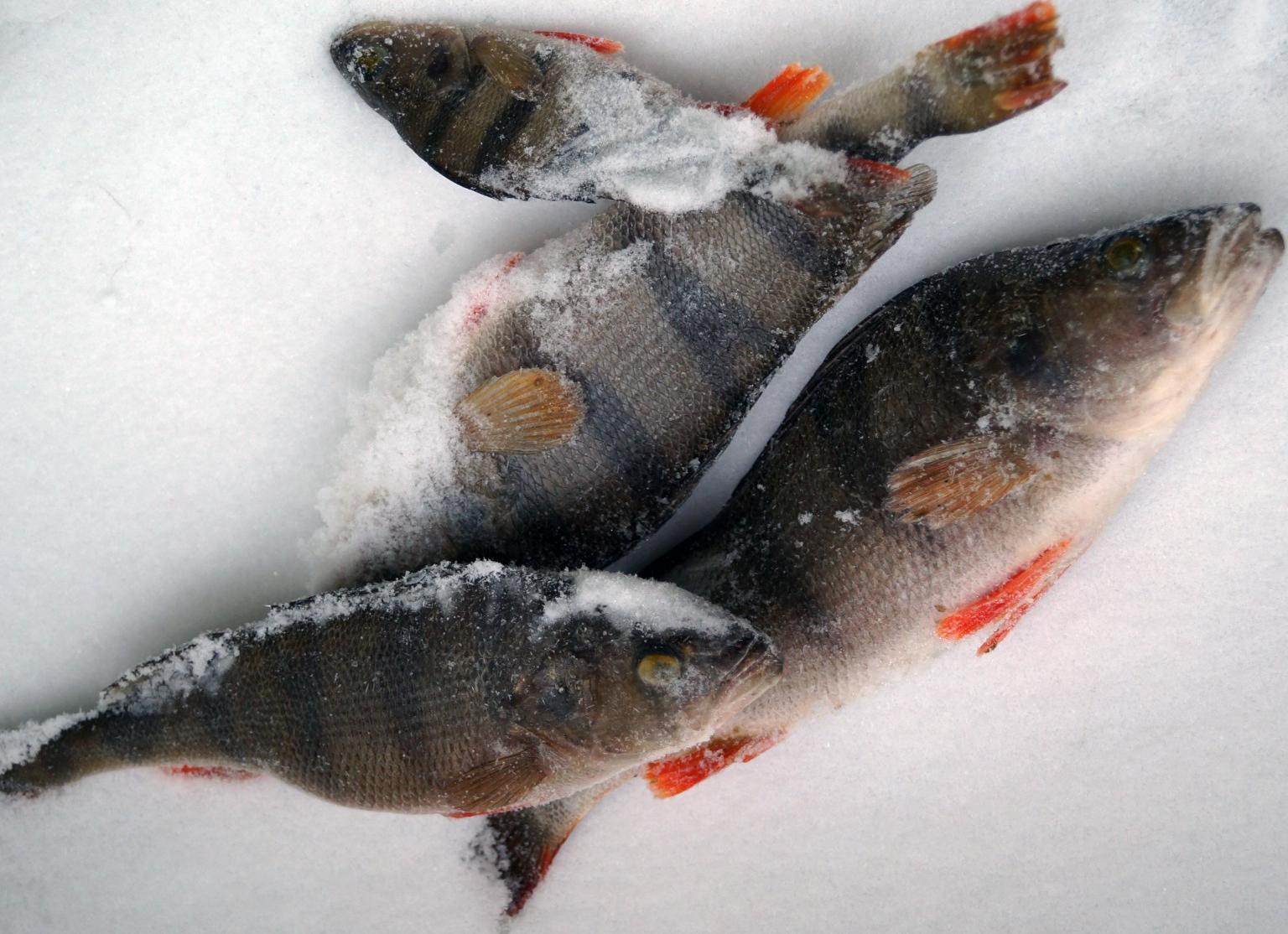 Карповское водохранилище волгоградской области рыбалка зимой