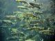 Экспорт норвежского лосося 01.01.18-07.01.18