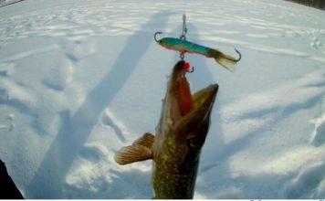Отчет о рыбалке:Еловое, озеро
