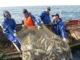 Утверждены правила предоставления и только по заключению договора о предоставлении рыбопромыслового участка