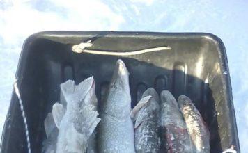 Отчет о рыбалке: 02 января 2018 — 03 января 2018, Иртыш река