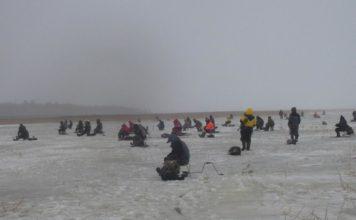 Отчет о рыбалке: Ладожское озеро