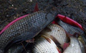 Отчет о рыбалке: 08 января 2018 — 09 января 2018, Десногорское водохранилище