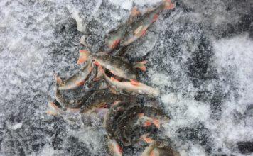 Отчет о рыбалке: 17 января 2018, безымянный водоем