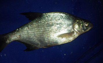 Отчет о рыбалке: 18 февраля 2818, Иртыш река