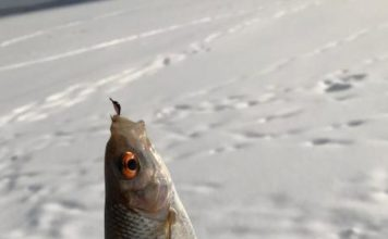 Отчет о рыбалке: 19 февраля 2018, Озерна водохранилище