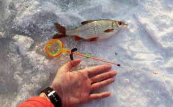 Отчет о рыбалке: 04 февраля 2018 — 07 февраля 2018, Исеть, река