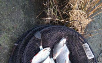 Отчет о рыбалке: 02 февраля 2018, Преголя , река