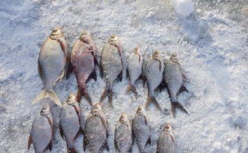 Отчет о рыбалке: 04 февраля 2018, Исетское, озеро