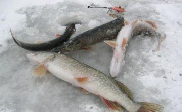 Отчет о рыбалке: 03 февраля 2018, Озеро Лужъер