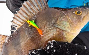 Отчет о рыбалке: 10 марта 2018, Синецкий  залив