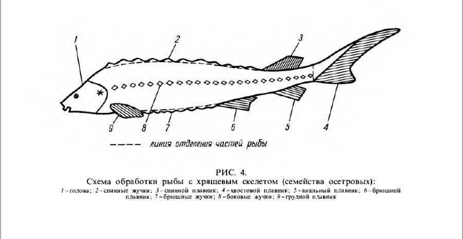 схема обработки рыбы