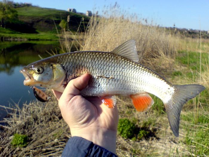 улов речной рыбы