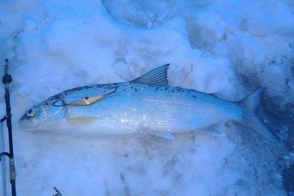 рыбная ловля зимой