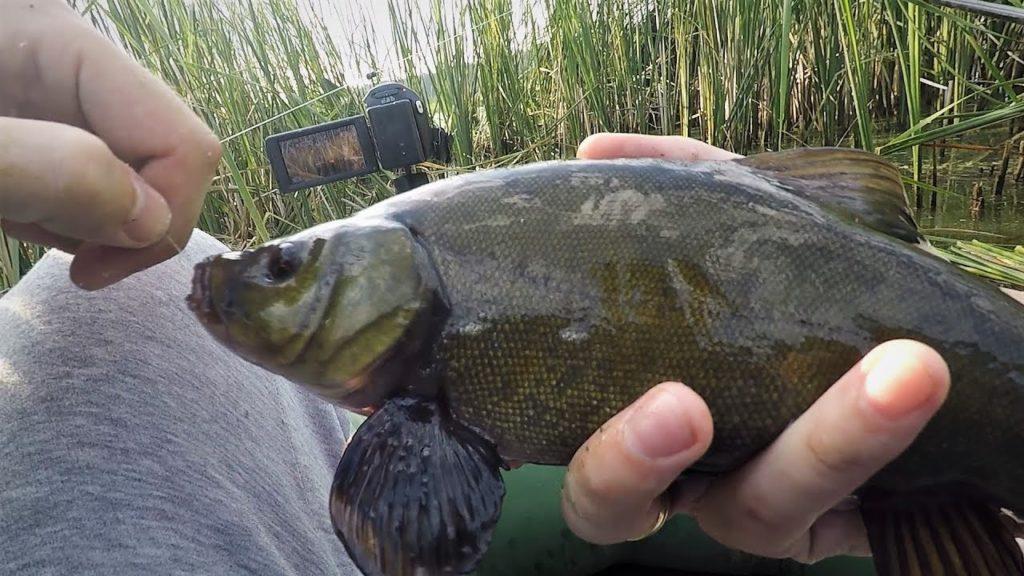 рыбалка о Лини