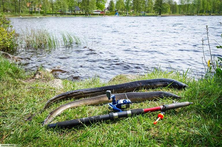 Оборудование-для-рыбалки