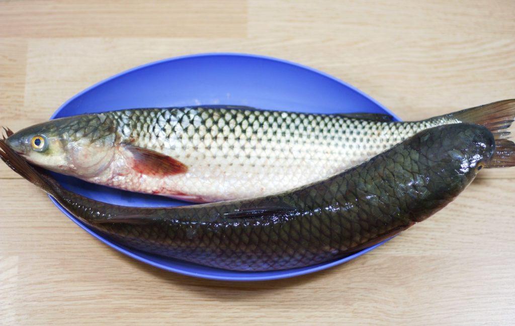 Кефаль рыба польза и вред. Польза и вред кефали