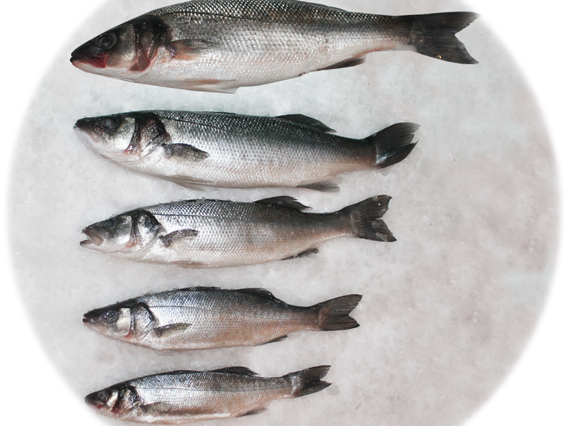 размер рыбы