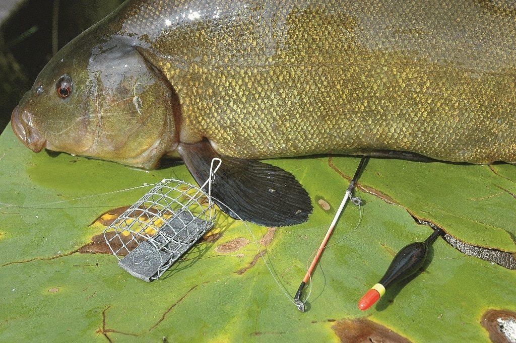 рыба на линя